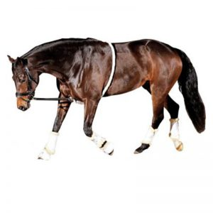 Longeerhulp-Horse-Guard